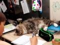 Марти помогает делать уроки
