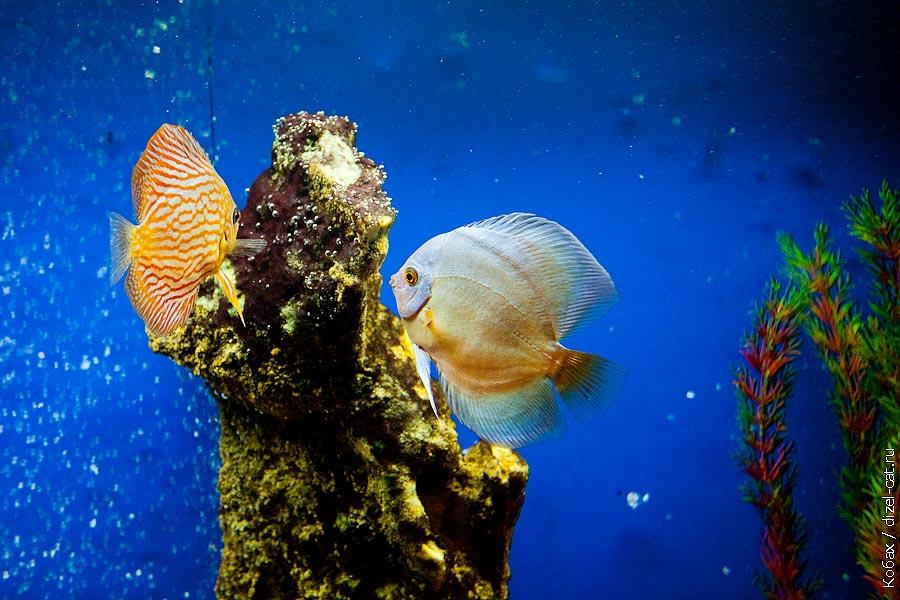океанариум кабардинка