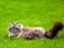 Кот вне серий