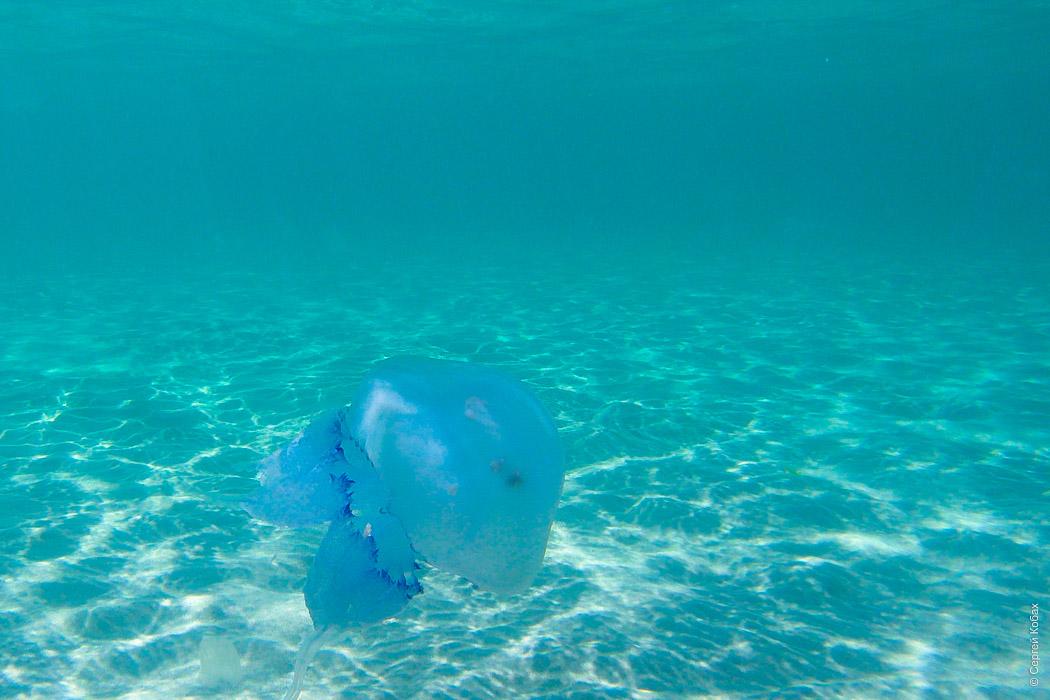 медуза тарханкут оленевка крым
