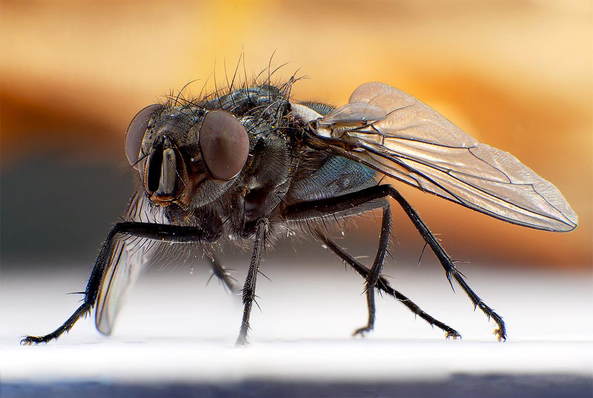 фотография мухи