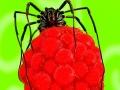 макрофото паука