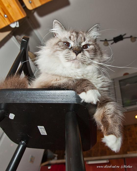 стихи про котов