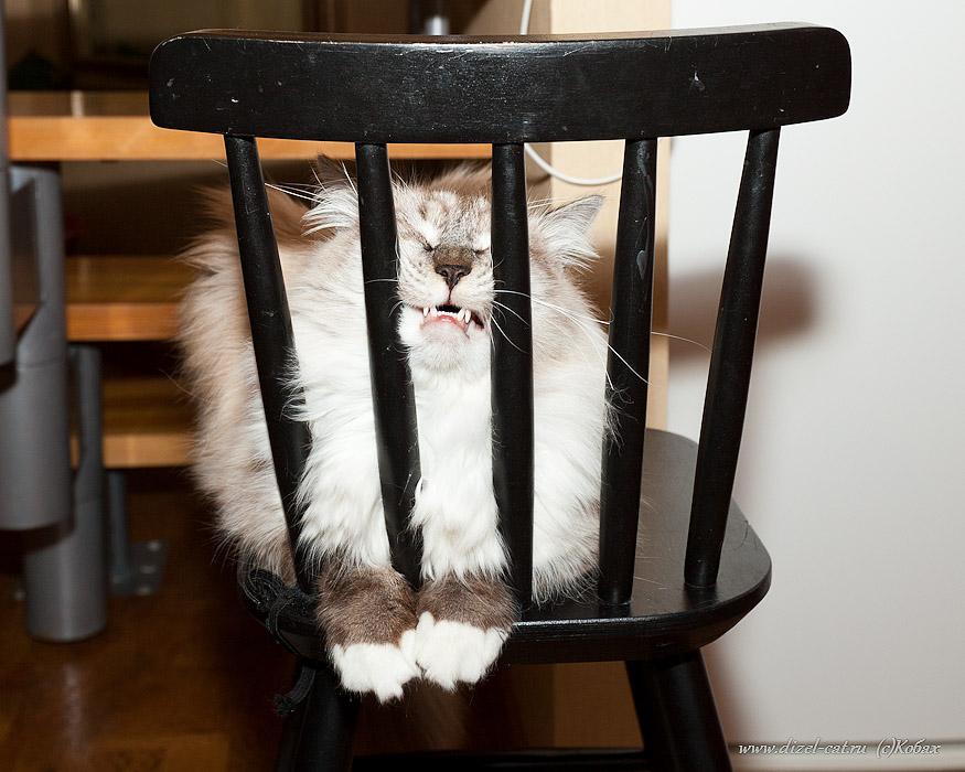 стихи про кота