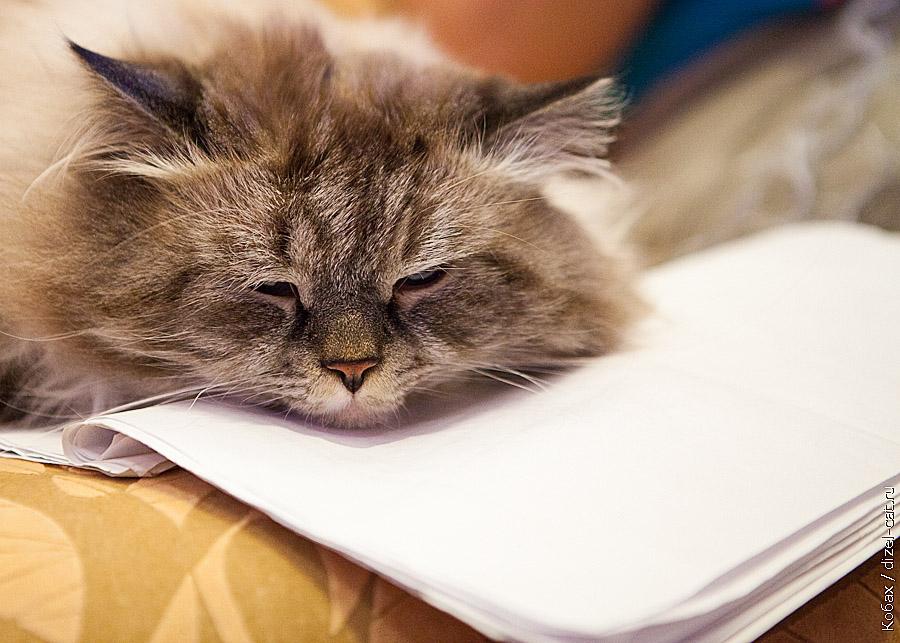 истории про кота