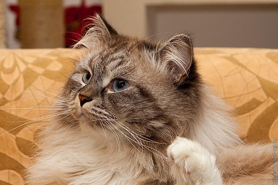 итории про кота