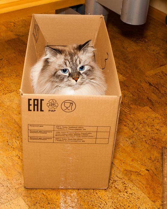 сева лайв сибирский кот невак