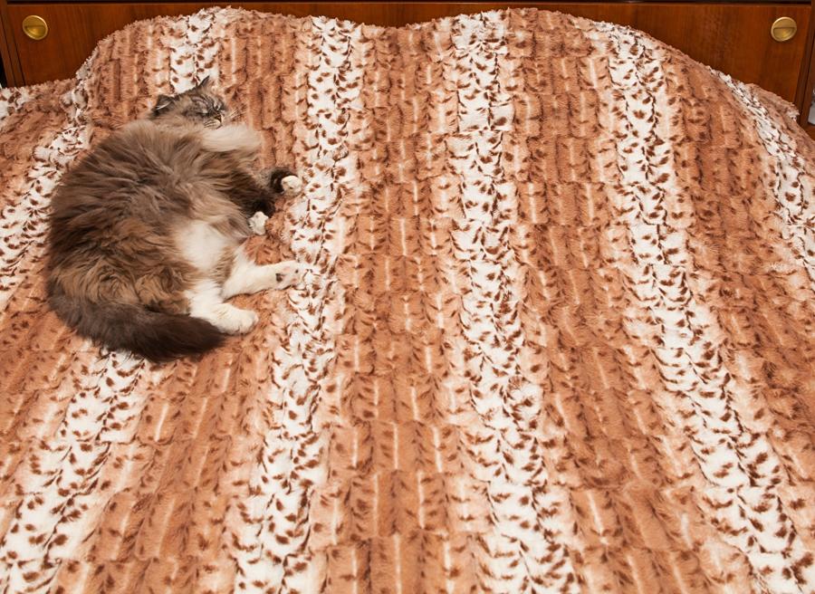 сева лайв, кот сева, невак, кот спит на кровате