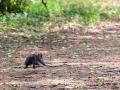 Белка убегает