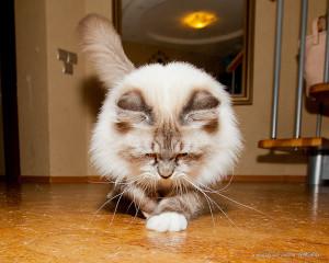 Поешь кота, Сережа